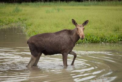 Wildpark ⋅ Öster Malma: Holgers Frau