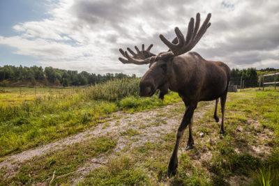 Wildpark ⋅ Öster Malma: Holger