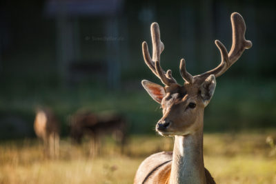 Wildpark ⋅ Öster Malma