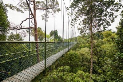 MacRitchies Nature Reserve ⋅ Singapur